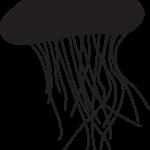 アンボイナガイはなぜ海のスズメバチと呼ばれているのか