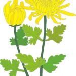 お墓参りの花選び 最適な花の種類は?予算相場はいくら?
