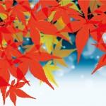 紅葉狩りの名所大阪を観光めぐり 見頃の時期はいつなの?